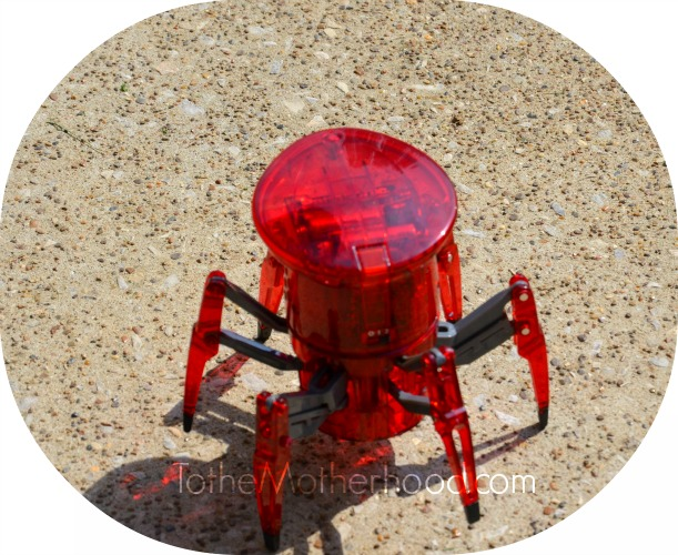 HEXBUG Spider XL II