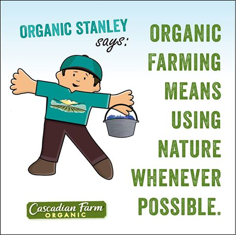 Organic Flat Stanley