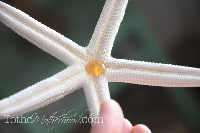 Gluing Starfish for Hair Crown