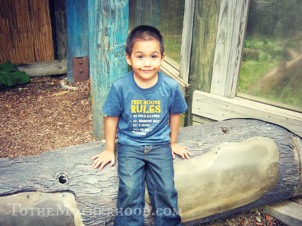 My Son at the Zoo