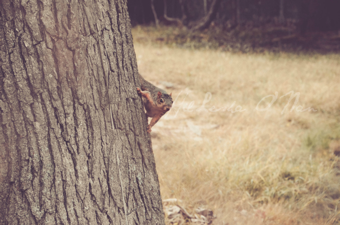 Squirell on the Tree