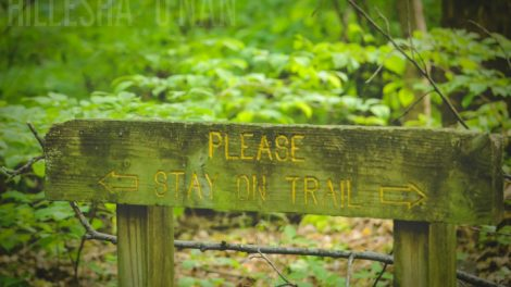Wesselman Woods Nature Preserve Please Stay on the Trail Sign