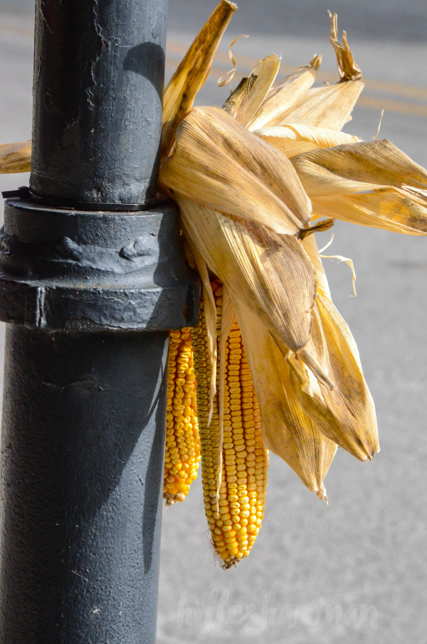 corn-decorations-downtown