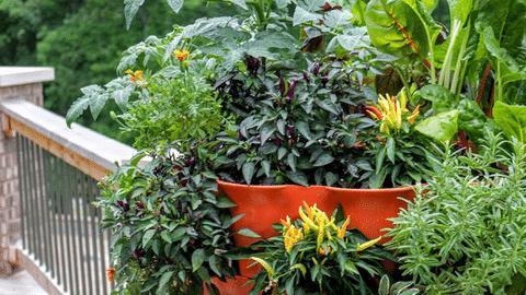 Outdoor Space: Balcony Garden